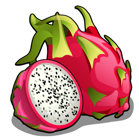 Set of whole and half of ripe pitahaya fruit or Hylocereus undatus, Dragon fruit. Element of a healthy diet. Delicious and healthy tropical fruits isolated on a white background. Vector illustration