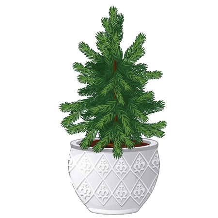 Office fir tree growing in ceramic pot in vintage style isolated on white background. Miniature potted plants in the style of New year and Christmas for home and office. Vector spruce