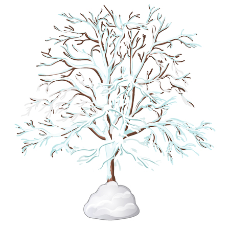 The leafless tree covered with snow isolated on white background. Vector illustration