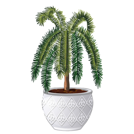 Office palm tree isolated on white background. Vector cartoon close-up illustration.