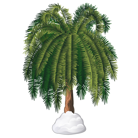 Tropical cartoon palm tree covered with snow isolated on white background. Vector cartoon close-up illustration.