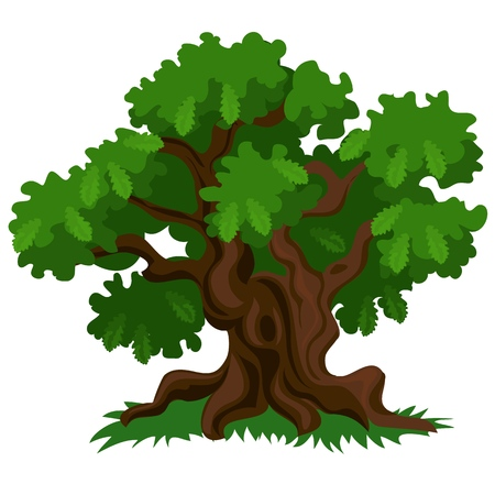 A deciduous oak tree with green leaves and fresh grass isolated on white background. Vector cartoon close-up illustration