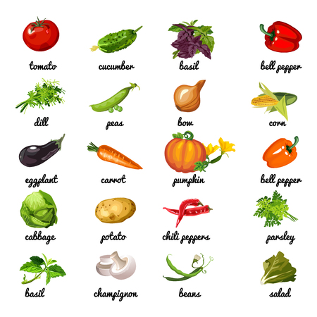 Cute poster on topic of healthy diet. Vegetables and herbs are rich in fiber. Sample card, cover for cookbook or manual for weight loss with inscriptions the names of vegetables. Cartoon vector Illustration