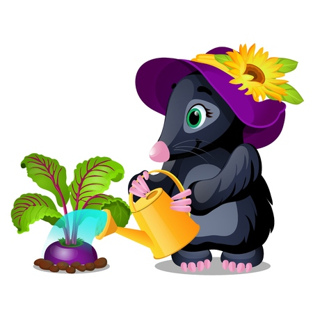 Cute animated mole watering beets from watering can isolated on white background. Vector cartoon close-up illustration Illustration