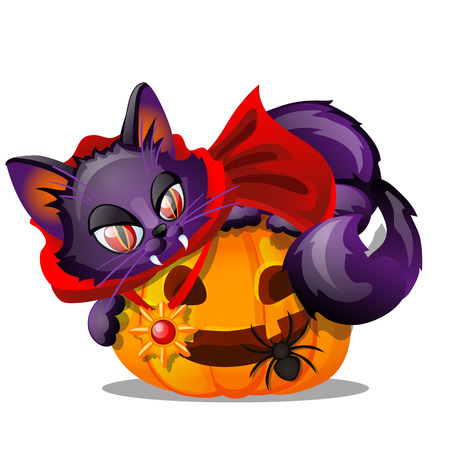 Purple cat with bared fang lying on Jack-o-lantern, black spider isolated on white background. Sketch for poster or card for holiday of all evil spirits Halloween. Vector cartoon close-up illustration