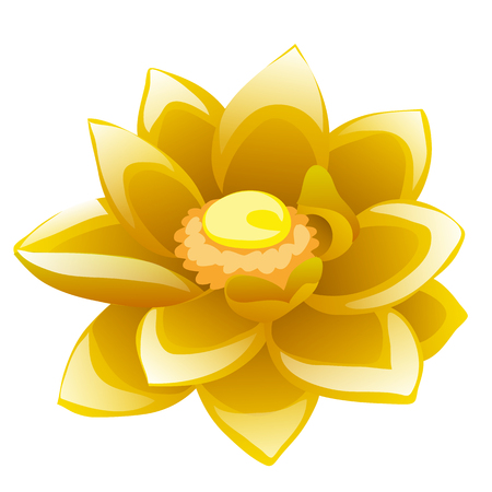 Cartoon flower yellow Lotus isolated on white background. Vector illustration.