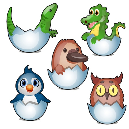 Cute new born animals hatch eggs isolated on white background. Vector cartoon close-up illustration.
