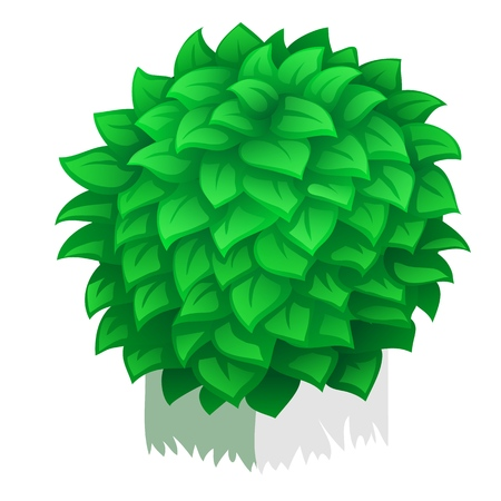 Compact rounded shrub isolated on white background. Vector cartoon close-up illustration