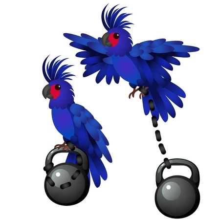 Blue parrot is tied to the weight isolated on white background. Vector cartoon close-up illustration 일러스트