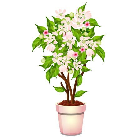 Office potted flowering tree isolated on white background. Vector cartoon close-up illustration