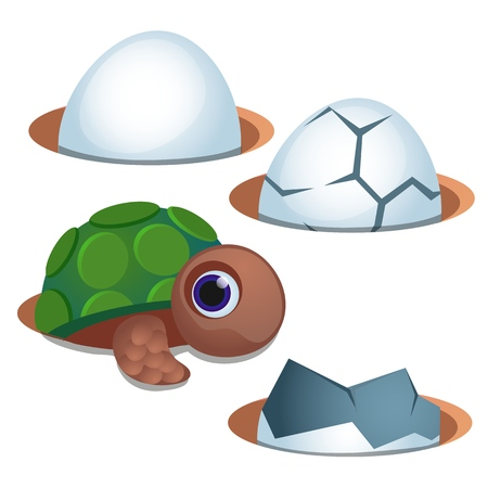 Pretty blue-eyed little turtle and cracked egg shell isolated on white Stok Fotoğraf - 116178128
