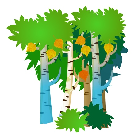 Several birch trees with summer and autumn leaves isolated on white background. Vector cartoon close-up illustration