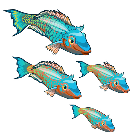 The growth stage of fancy fish with colorful scales isolated on a white background. Cartoon vector close-up illustration