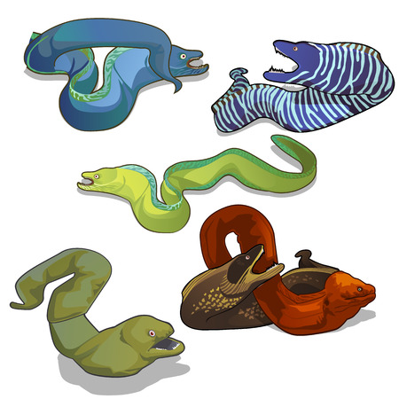 Set of colorful moray eels isolated on white background. Vector cartoon close-up illustration