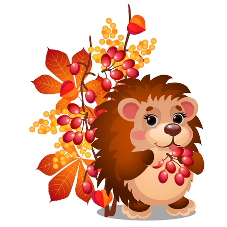 Cheerful smiling hedgehog eats ripe berries of viburnum and autumn leaves isolated on white background. Vector cartoon close-up illustration