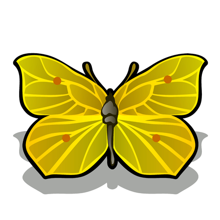 The butterfly is made from the pulp of ripe lemon isolated on white background. Vector cartoon close-up illustration