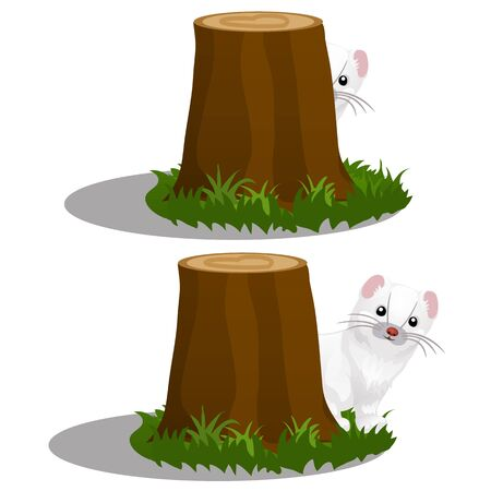 Least Weasel or Mustela nivalis hides behind a stump in the forest isolated on a white background. Vector cartoon close-up illustration.