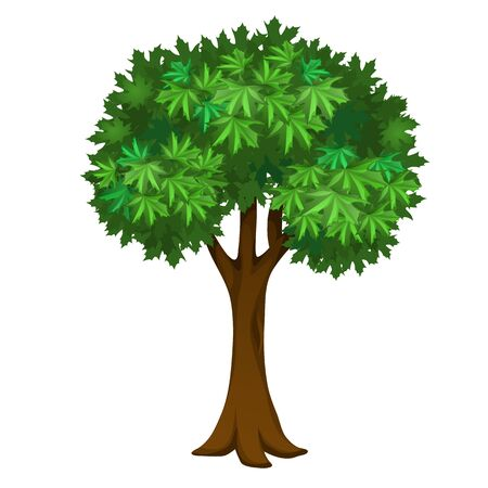 Maple tree with green leaves isolated on white background. Vector cartoon close-up illustration