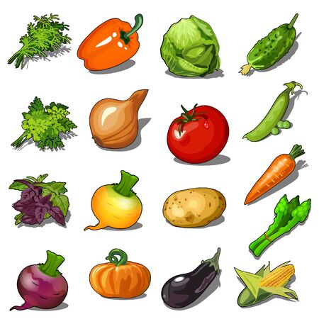 Set of ripe vegetables isolated on white