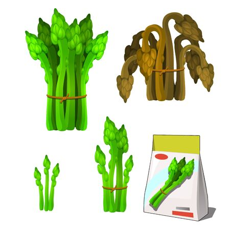 Set of stages of life of a agricultural plant green asparagus isolated on white background. Paper packaging for storage of seeds. Vector cartoon close-up illustration