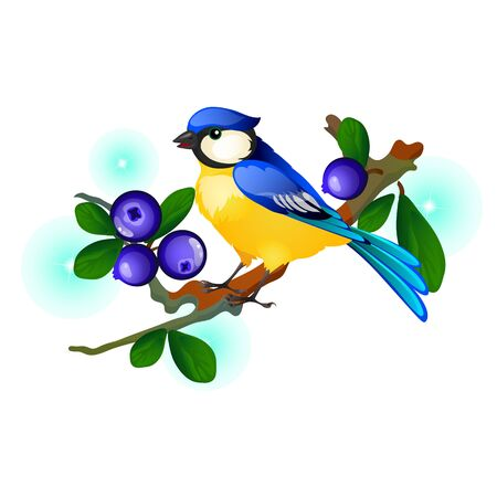 Blue and yellow bird sitting on a branch with blue berries isolated on white Ilustração