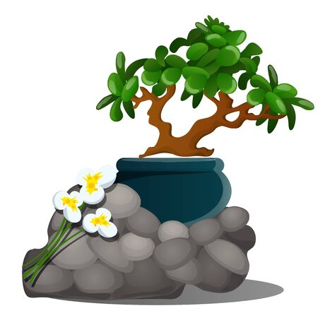 A beautiful composition of grey stones, a miniature potted tree bonsai and fresh spring flowers of daffodils isolated on white background. Vector cartoon close-up illustration Illustration