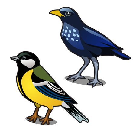 Bird blue tit and jackdaw isolated on white background. Vector cartoon close-up illustration. Ilustração