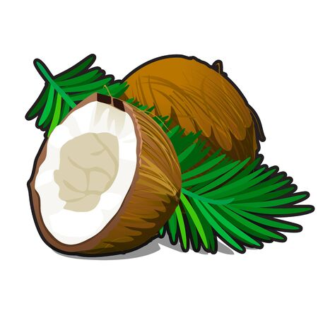 Broken and whole coconut with leaves isolated on white