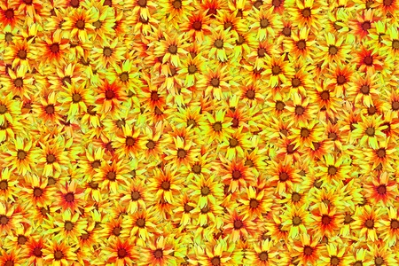Blooming yellow gazania flower abstract colorful background. Banque d'images