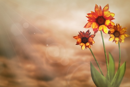 Beautiful live gazania on sunny day with empty on colored sky with clouds background.