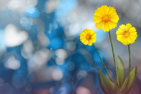 Beautiful live coreopsis on sunny day with empty on tree leaves blurred bokeh background.