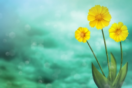 Beautiful live coreopsis on sunny day with empty on colored sky with clouds background. Stockfoto