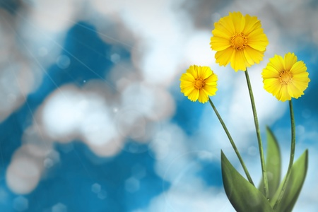 Beautiful live coreopsis on sunny day with empty on nature leaves and branches bokeh background. Stock Photo