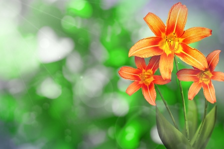 Beautiful live lily on sunny day with empty on tree leaves blurred bokeh background. Stockfoto
