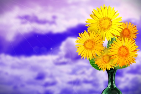 Beautiful live daisy or chamomile bouquet bouquet in ceramic vase on sunny day with empty on sunny day sky with clouds background.