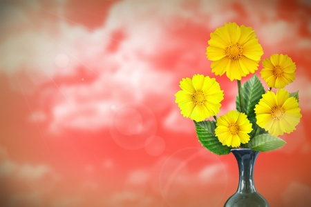 Beautiful live coreopsis bouquet bouquet in ceramic vase on sunny day with empty space for your content on cloudy sky background. Stockfoto