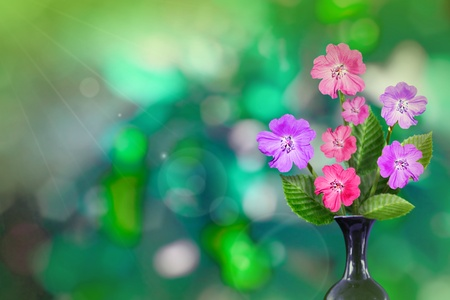 Beautiful live petunia bouquet bouquet in ceramic vase on sunny day with empty space for your content on tree leaves blurred bokeh background. Stockfoto