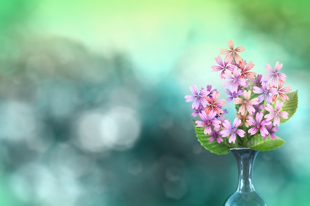 Beautiful live malva or mallow bouquet bouquet in ceramic vase on sunny day with empty space for your content on natural leaves and sky blurred bokeh background. Stockfoto