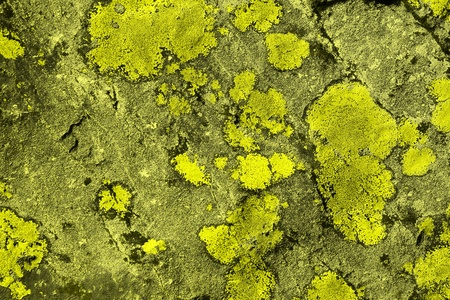fantastic yellow old scratched fungus on stone texture - abstract photo background Stok Fotoğraf