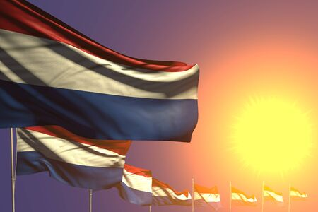 nice anthem day flag 3d illustration  - many Netherlands flags placed diagonal on sunset with place for your content