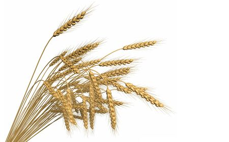 rendered bunch of wheat spikelets isolated on white background - agriculture, industrial 3D illustration 写真素材 - 129532254