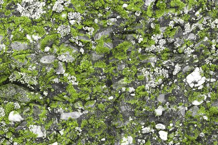 nice lime creative weathered moss on stone texture - abstract photo background