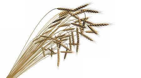 cg sheaf of wheat spica isolated on white background - agriculture, industrial 3D illustration Banco de Imagens