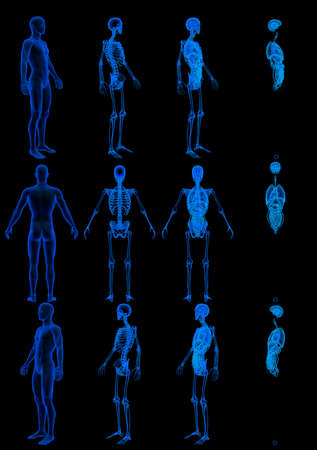 12 x-ray renders of male body with skeleton and internal organs - roentgen concept for healthcare - digital high resolution medical 3D illustration isolated