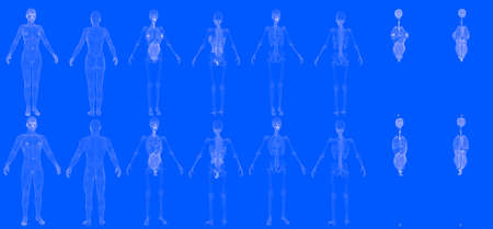 Set of 16 hologram mesh renders of man and woman bodies with skeleton and internal organs isolated - digital hi-res medical 3D illustration in blueprint style 免版税图像
