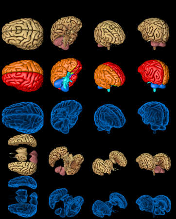 100 megapixels set - human brain with roentgen style image and highlighted zones isolated, medical discovery concept - digital high resolution medical 3D illustration