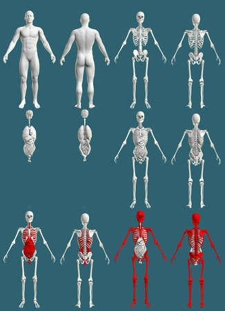 12 high resolution renders in 1, mans body with skeleton and organs - hospital colored research concept - digital medical 3D illustration isolated on blue