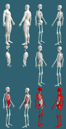 12 high resolution renders in 1, mans body with skeleton and organs - hospital colored examination concept - cg medical 3D illustration isolated on blue