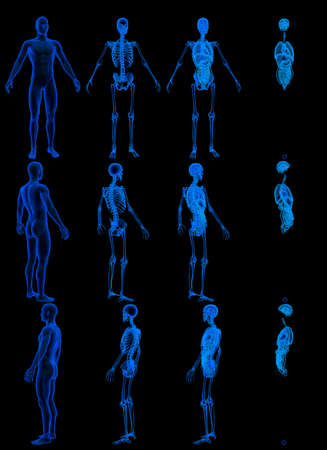 12 x-ray renders of male body with skeleton and internal organs - anatomical concept for medicine - cg high resolution medical 3D illustration isolated