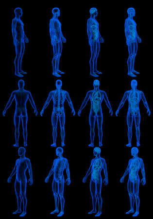 12 x-ray hologram renders of male body with skeleton and internal organs - anatomy concept for science - cg detailed medical 3D illustration isolated